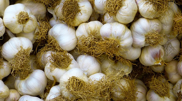 The 10 Benefits Of Garlic